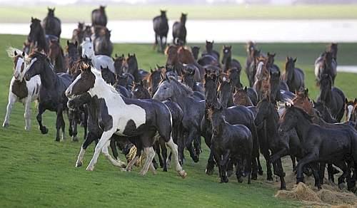 Cavalli in Fuga