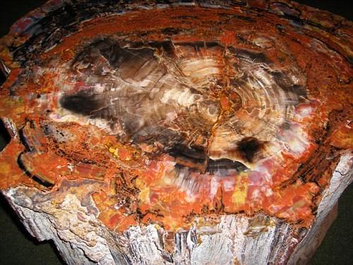Giethoorn De Oude Aarde Museum - L'Albero di 150 Milioni di anni fa