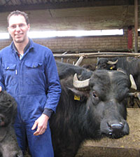 bufale, allevatore