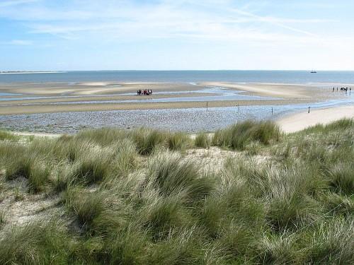 Le Isole di Wadden, spiaggia verde