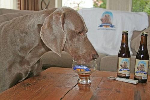 Kwispelbier, la birra che beve il cane